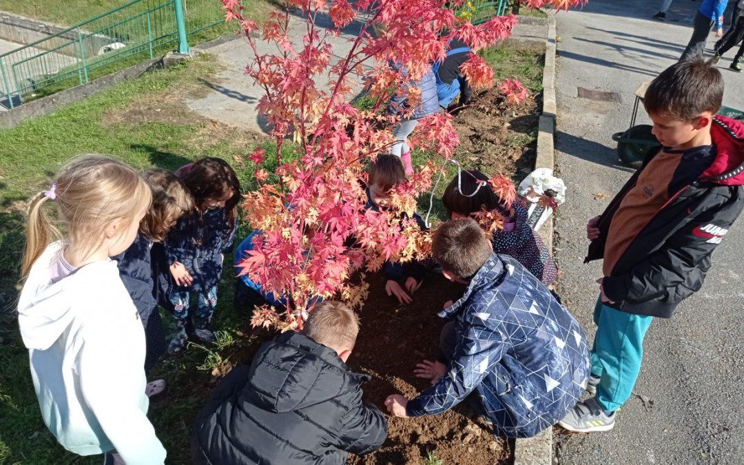 Na Podružnični šoli Adlešiči smo zasadili grmovnice